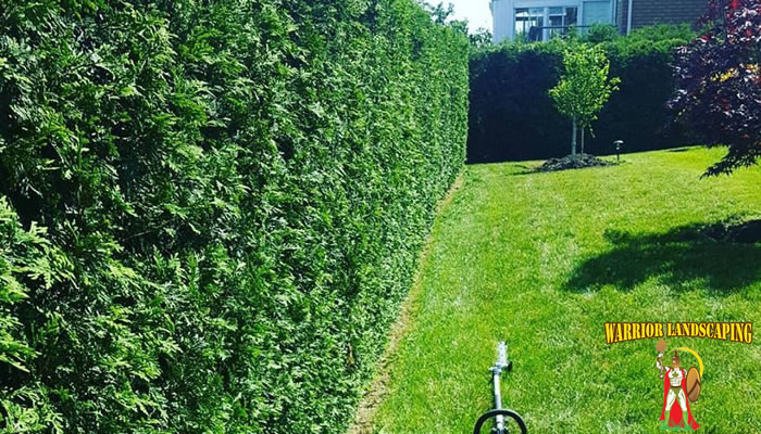 Hedge and Tree Trimming and Pruning Grand Valley To Mississauga Ontario.