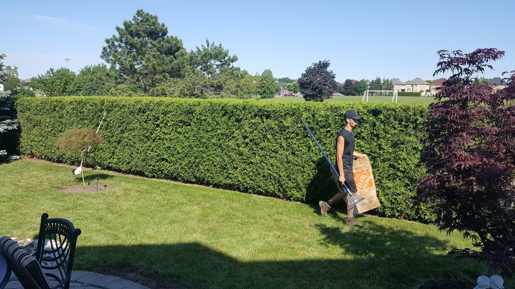 Hedge Pruning Services