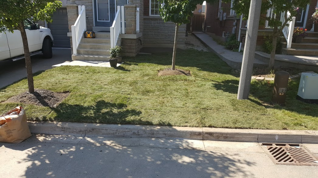 New Lawn After Sod Installation