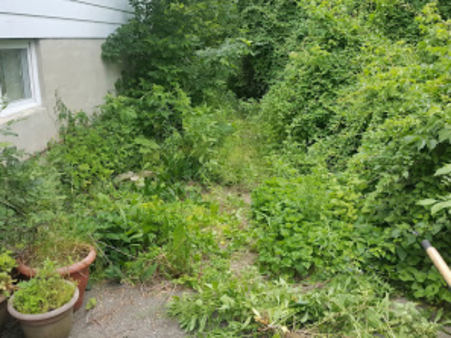Before Lawn - Very Overgrown and Messy.