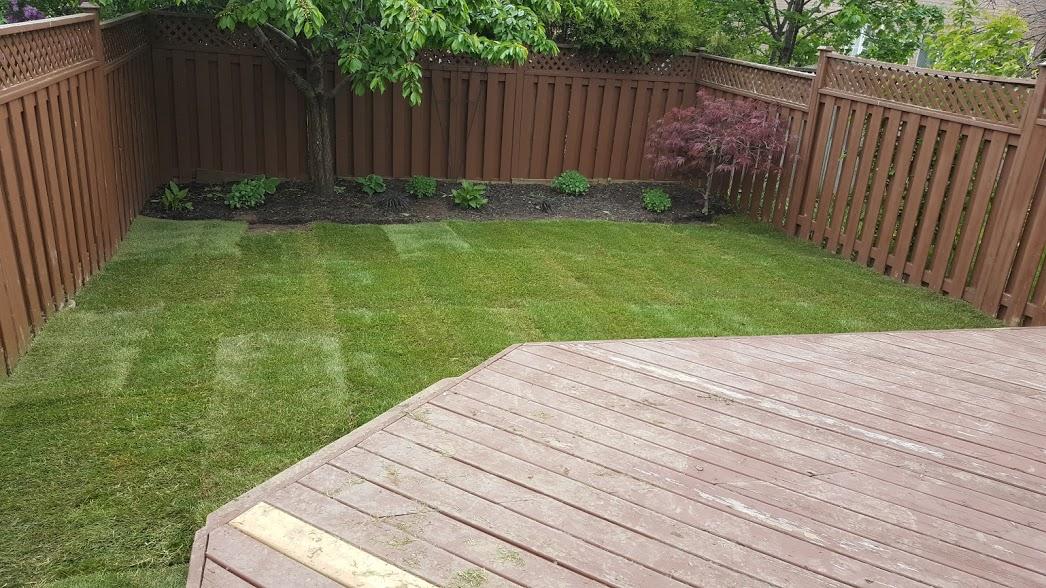 New Sod Lawn Installed