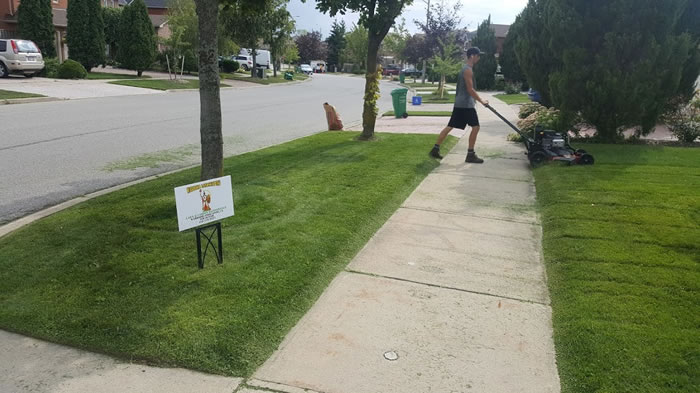 Lawn Mowing Services From Grand Valley To Mississauga Ontario.