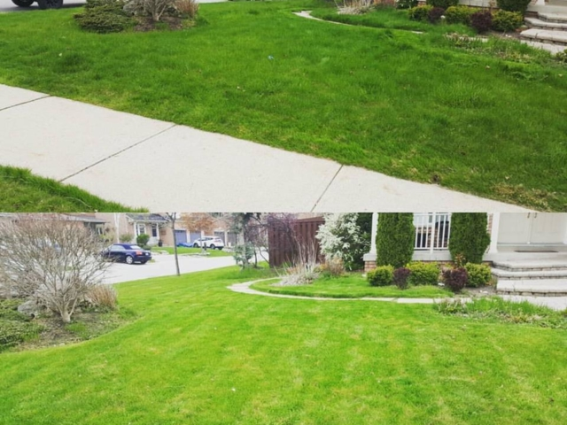 Before and After Photos of an Overgrown Lawn the Warriors Cut.