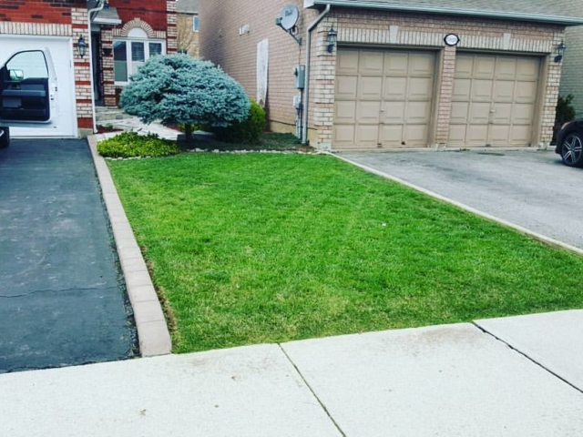Small Lawn After Mowing