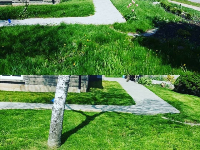 Before and After Of An Overgrown Lawn After Mowing