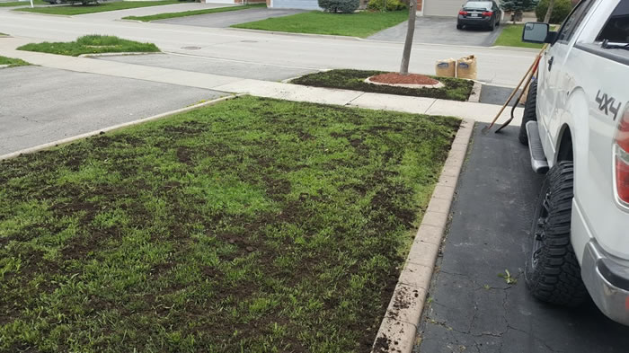 Lawn Overseeding In Grand Valley and Mississauga Ontario.