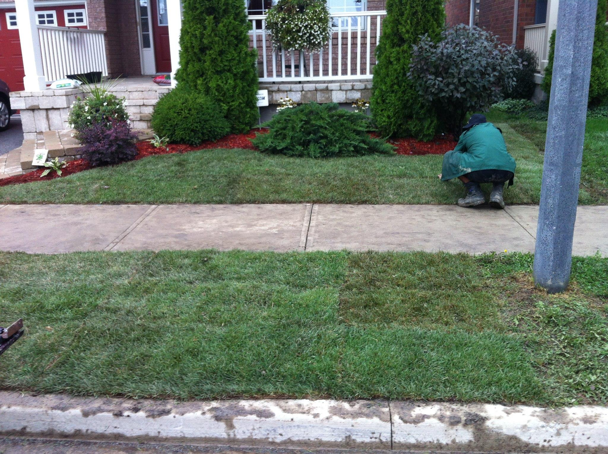 Lawn After Sod Installation