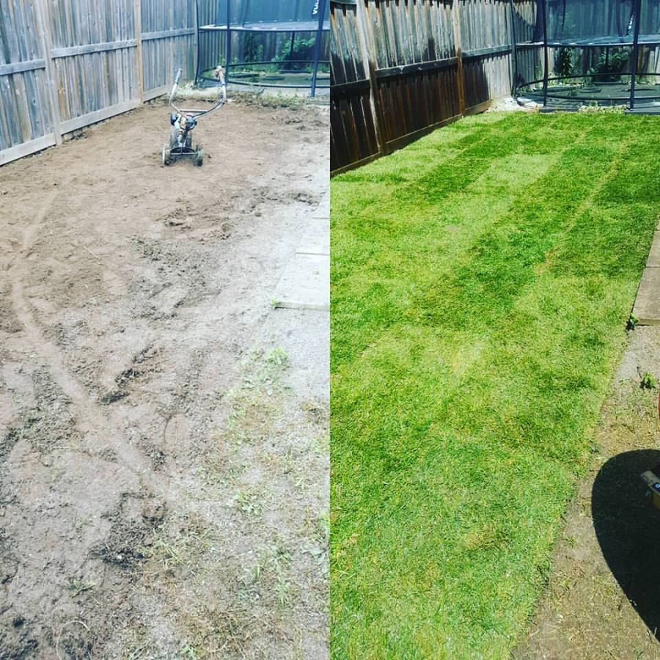 Before and After Photos of a Lawn Installation