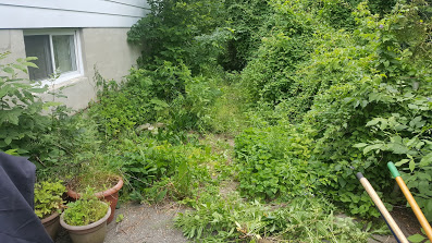 An Overgrown Garden Cleanup By Warrior Landscaping