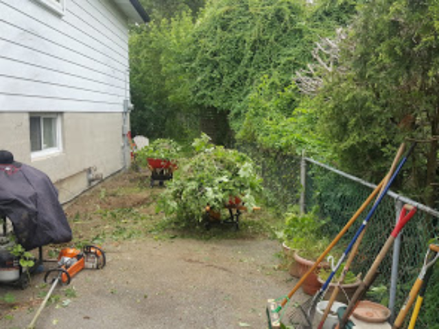 Cleaning Up An Overgrown Lawn