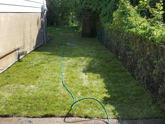 New Lawn Installation After Garden Clean Up.