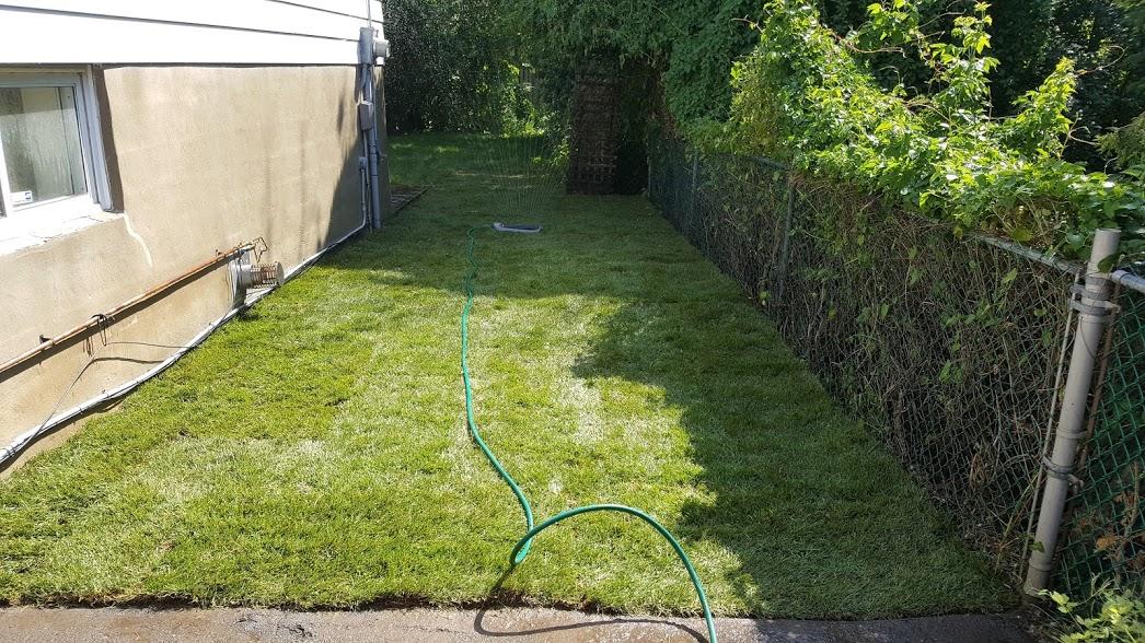 New Lawn Installation After Garden Clean Up.