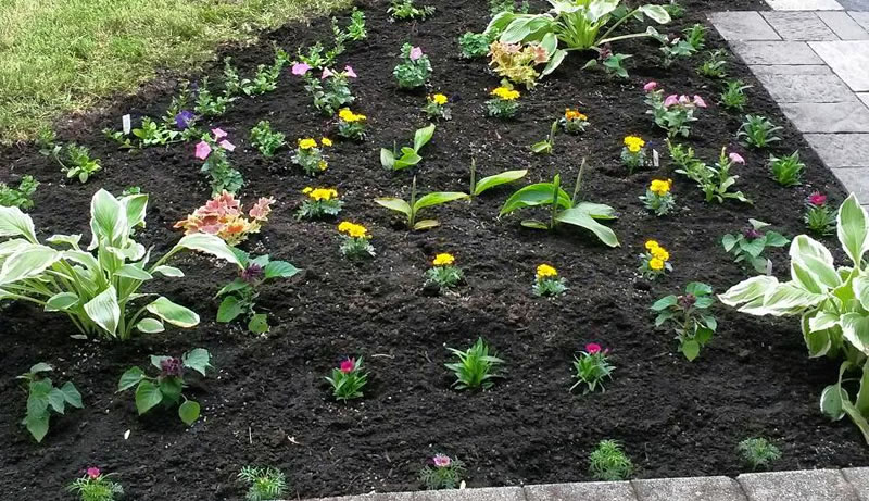 Planting Flowers and Garden Beds